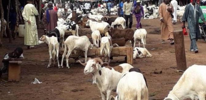Marchés à bétail de Séwékhaye et Toubatoul, deux sites aux fortunes diverses
