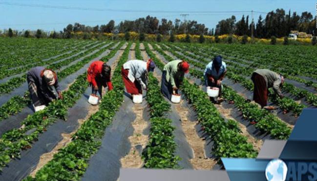 SENEGAL-AGRICULTURE Kaffrine et Louga dotées de 46 fermes agricoles grâce au PASA (responsable)